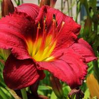 Lily IMG_4367