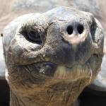 """funny face tortoise turtle closeup"" by jpt"