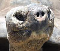 funny face tortoise turtle closeup