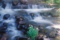 Mountain Stream Near Crested Butte