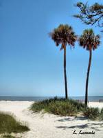 Low Country Beach