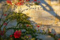 Wall with Flowers