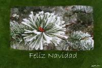 Snowy Evergreen Branches Close - Feliz Navidad