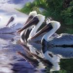 """""""Pelican Heaven"""" by SteveHunziker"""