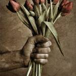 """tulip"" by fmatte"