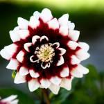 """""""Flower"""" by DanieleLembo"""