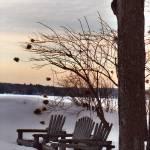 """""""Webster Winter"""" by thirdeyeimage"""