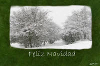 Snowy Winter Trees and Shrubs - Feliz Navidad