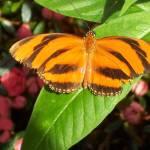 """""""Banded Orange"""" by etobin61"""