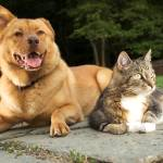 """""""Dog and cat relaxing"""" by MichaelPettigrew"""