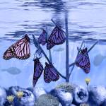 """Butterfly Reef"" by aerhona"