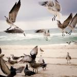"""Seagulls 3"" by juliekruger"
