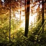 """Rays of Light"" by talha"