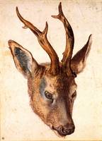 Roebucks Deer Head