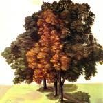 """Three Linden on a Field"" by ArtLoversOnline"