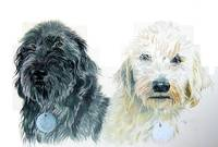 Two Labradoodles