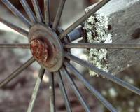 Spokes and Lichen
