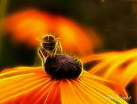 Bee on flower with Fractals