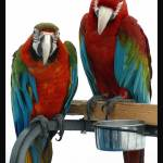 """Green-winged Macaws"" by Merlin_Studios"