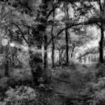 """""""McKinney Falls Woods"""" by mr3wan"""