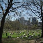 """Sheep Meadow Central Park on the first sunny day i"" by BarbaraBerger"