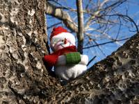 Snowman waiting for Christmas 5