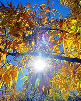 Sunny Yellow Leaves