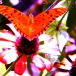 """Butterfly"" by michaelmontesino"