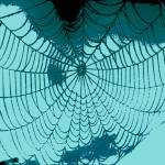 """Abstract Spider Web"" by crazyabouthercats"