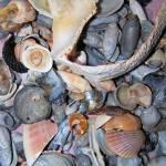 """Beautiful Shells"" by ghardesty"