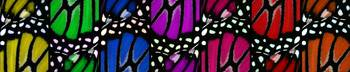 Monarch on Canvas Full Circle