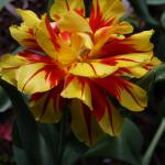 """Flower Tango"" by DianaC"