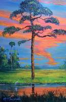 Fire Sky Slash Pine Tree