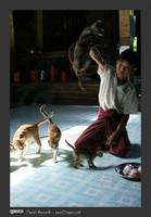 inle_lake_jumping_cat_monestary