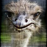"""""""Emu"""" by ArtFocus"""