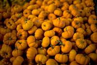 Many Tiny Pumpkins
