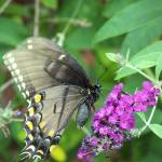 """""""Beautiful Butterfly"""" by ghardesty"""