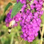 """Hummingbird or Bee"" by ghardesty"