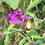 """Bee or Hummingbird"" by ghardesty"