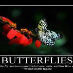 """""""butterflies1200"""" by springblossomprints"""