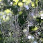 """Spiderweb"" by scottcoleson"