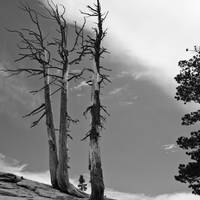 Three trees, Sentinel Dome, Yosemite