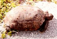 Tortoise in the Sun