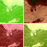 """Pop Art Spider Web"" by crazyabouthercats"