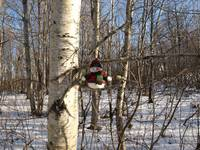 My snowman in a tree