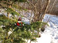My snowman in a tree 8 (NICE?)