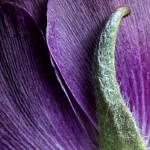 """""""purple flower"""" by JulieScholz"""