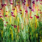 """Garden Impression"" by BCImages"