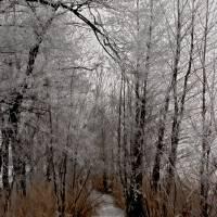 Frozen stream Art Prints & Posters by Maja Maja