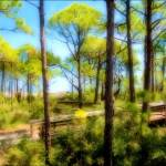 """""""Walk in the Pines"""" by doncon402"""